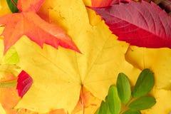 Multicolored de herfstbladeren als achtergrond of achtergrond Royalty-vrije Stock Afbeelding