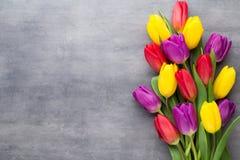 Multicolored de lentebloemen, tulp op een grijze achtergrond royalty-vrije stock afbeeldingen