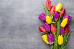 Multicolored de lentebloemen, tulp op een grijze achtergrond royalty-vrije stock foto's