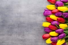 Multicolored de lentebloemen, tulp op een grijze achtergrond stock afbeelding
