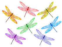Multicolored dragonflies Royalty Free Stock Images
