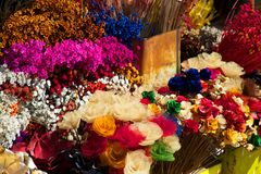 Multicolored dry flowers Stock Images