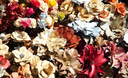 Multicolored dry flowers Stock Image