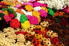 Multicolored dry flowers Royalty Free Stock Photos
