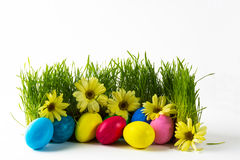 Multicolored Easter eggs in green grass Stock Photos