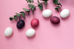 Multicolored easter painted eggs in pink and white tones with a green eucalyptus branch on a pink background. Pink egg Royalty Free Stock Images