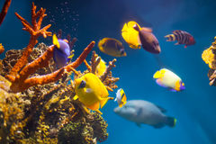 Multicolored exotic fish Stock Image