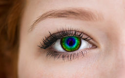 Multicolored eye. Royalty Free Stock Photography