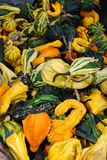 Multicolored fancy winter squash. A pile of Multicolored fancy winter squash.  Used as decoration in the fall or autumn, as halloween approaches Stock Photo