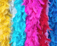 Multicolored feather boas Royalty Free Stock Photography