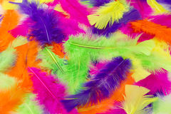 Multicolored feathers as a background Stock Images