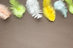 Multicolored feathers on a brown background, space for text.  royalty free stock photo