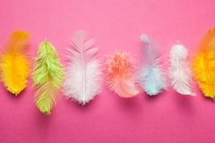 Multicolored feathers on a pink background.  royalty free stock photography