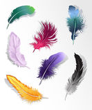 Multicolored feathers set Stock Image