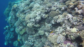 Multicolored fish and corals on reefs stock footage