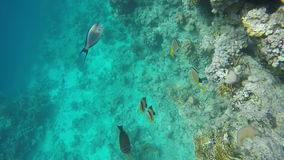 Multicolored fish swim near the reef. Slow Motion, 120 fps stock video
