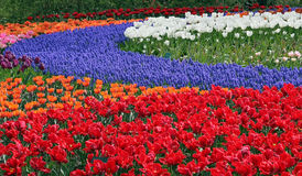 Multicolored flower bed Royalty Free Stock Images