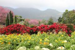 Multicolored flower bed in garden. Stock Photos
