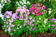 Multicolored flower bed Stock Photography
