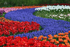 Multicolored flower carpet Stock Photography
