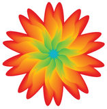 Multicolored flower, element for disign. Isolated on white, illustration vector illustration
