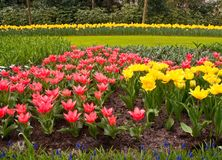 Multicolored flowerbed . Royalty Free Stock Photography
