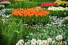 Multicolored flowerbed . Pretty manicured flower garden with colorful flowers royalty free stock images
