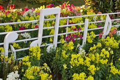 Multicolored flowerbed Royalty Free Stock Photography