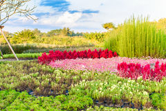 Multicolored flowerbed on a lawn Stock Photos