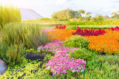 Multicolored flowerbed on a lawn Stock Image