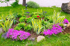 Multicolored flowerbed on a lawn. horizontal shot Royalty Free Stock Photo