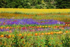 Multicolored flowerbed on a lawn Royalty Free Stock Images