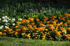 Multicolored flowerbed on a lawn. horizontal shot. small GRIP Stock Images