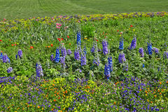 Multicolored flowerbed on a lawn Stock Images