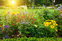 Multicolored flowerbed in park Royalty Free Stock Image