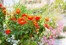 Multicolored flowerbed on a street Royalty Free Stock Image