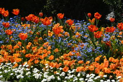 Multicolored Flowerbed Royalty Free Stock Image