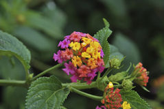 Multicolored flowers Royalty Free Stock Photos