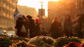 Multicolored flowers on a background of a blurred city landscape with walking people in golden Sunset.  stock video footage