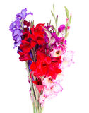 Multicolored flowers gladiolus Royalty Free Stock Photography
