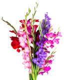 Multicolored flowers gladiolus Stock Photos