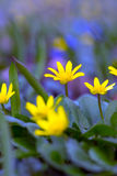 Multicolored flowers Stock Photo