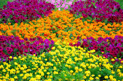 Multicolored flowers Royalty Free Stock Photo