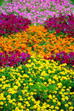 Multicolored flowers Stock Images
