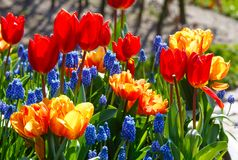 Multicolored flowers on spring flowerbed. Stock Photos