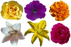 Different flowers on a transparent background. Stock Image