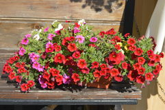 Multicolored flowers . Stock Image