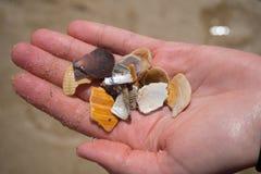Multicolored fragmenten van zeeschelpen Royalty-vrije Stock Afbeelding