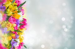 Freesia and daffodil flowers border. Multicolored freesia and daffodil flowers on gray bokeh background banner Stock Photography