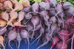 Multicolored Fresh Beats Stock Photos